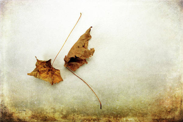 Photograph - Point Of Leaving by Randi Grace Nilsberg