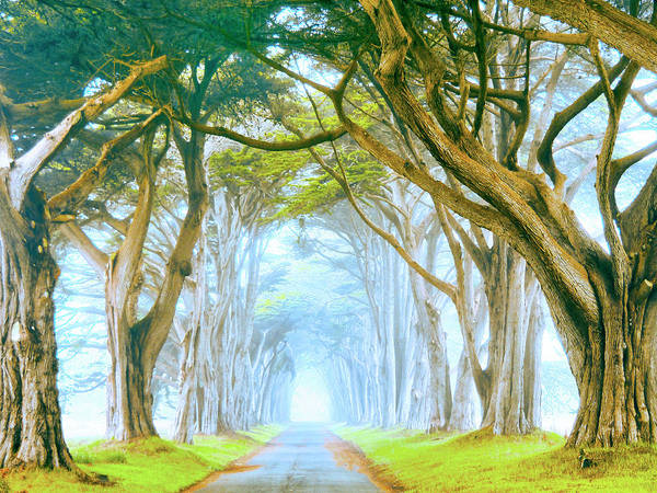 Wall Art - Painting - Point Reyes Cypress In Morning Fog by Dominic Piperata