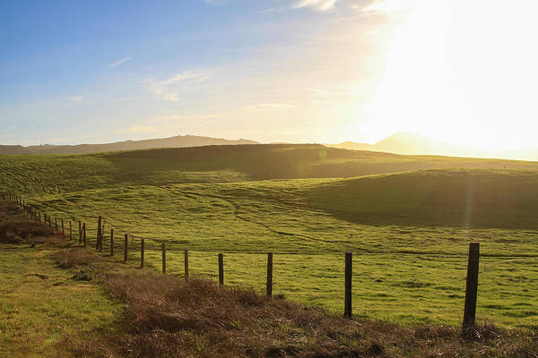 Photograph - Point Reyes Pasture Near Sunset by Bonnie Follett