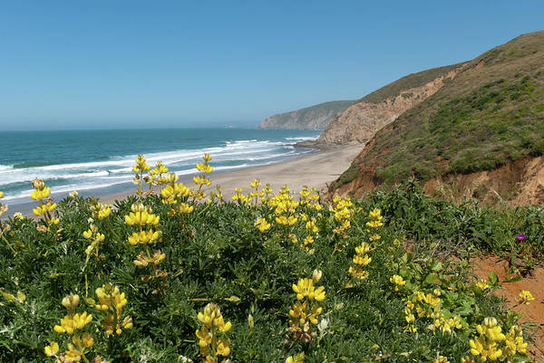 Photograph - Point Reyes Spring Landscape by Cascade Colors