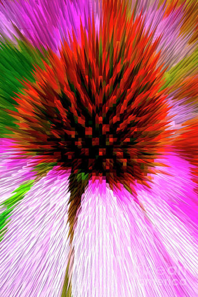 Wall Art - Photograph - Pointed Flower by Paul W Faust - Impressions of Light