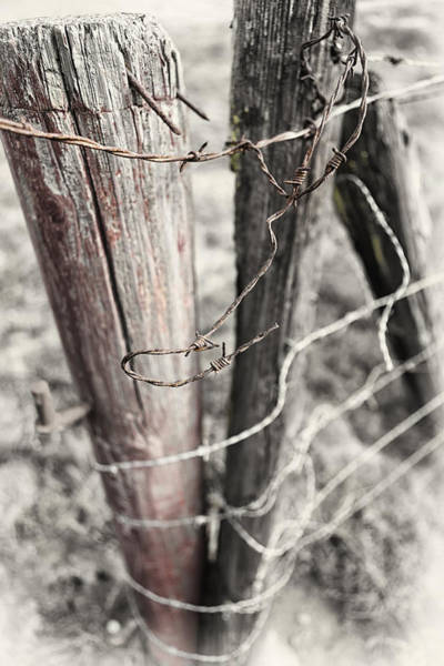 Wall Art - Photograph - Points And Posts by Caitlyn  Grasso