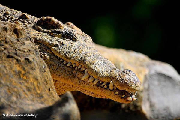 Photograph - Pointy Teeth by Barbara Bowen