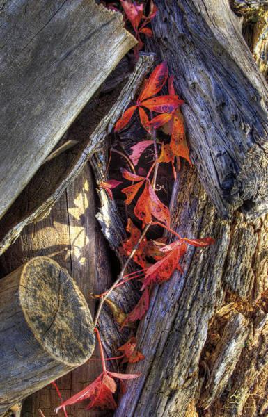Photograph - Poison Oak by Sam Davis Johnson