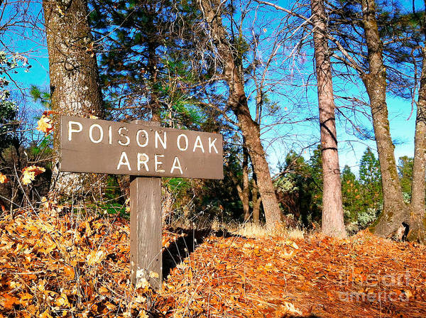 Photograph - Poison Oak Warning Sign In Natural Area by Bryan Mullennix