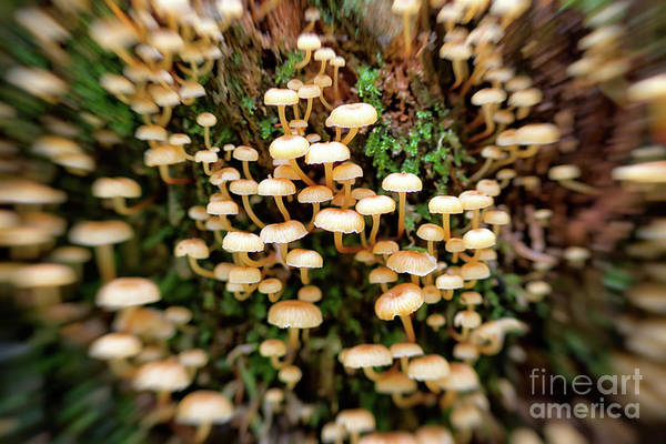 Wall Art - Photograph - Poisoning Inedible Mushrooms by Michal Boubin