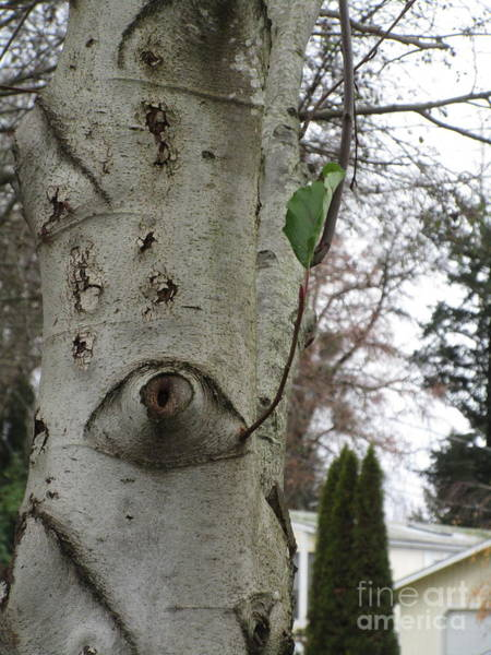 Photograph - Poke In The Eye With A Sharp Stick by Marie Neder