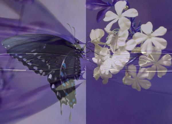Purple Rose Digital Art - Polar Attraction by Rose  Hill