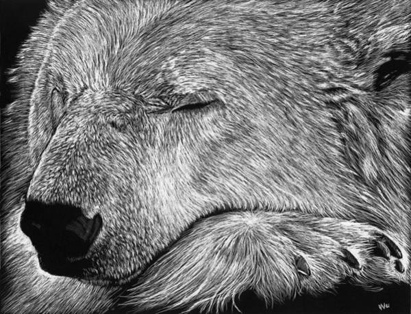 Drawing - Polar Bear Asleep by William Underwood