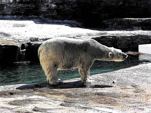 Photograph - Polar Bear At Buffalo New York Zoo With Ink Sketch Effect 2 by Rose Santuci-Sofranko