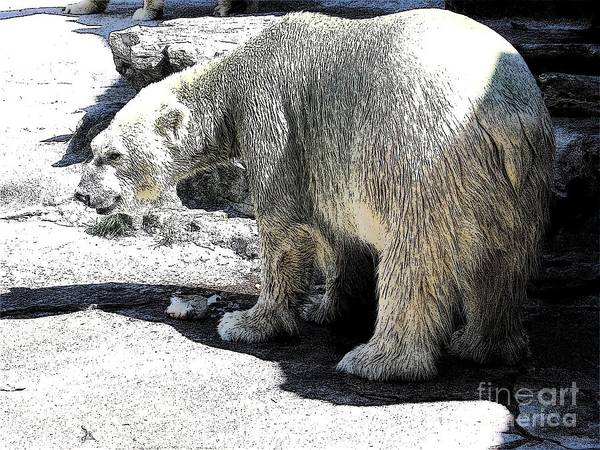 Photograph - Polar Bear At Buffalo New York Zoo With Ink Sketch Effect by Rose Santuci-Sofranko