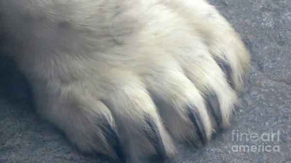 Photograph - Polar Bear Claw by Mary Mikawoz