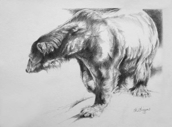 Polar Bear Drawing - Polar Bear by Derrick Higgins