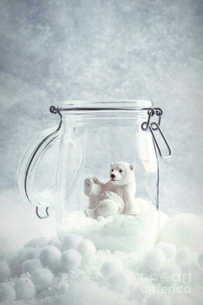 Polar Bear Photograph - Polar Bear Snowglobe by Amanda Elwell