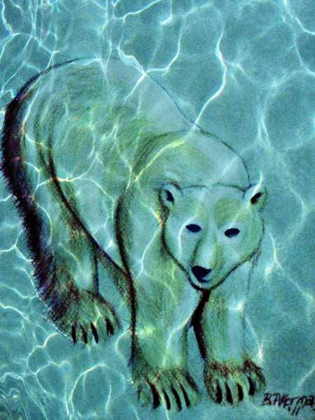 Drawing - Polar Bear Under Water by Beth Akerman