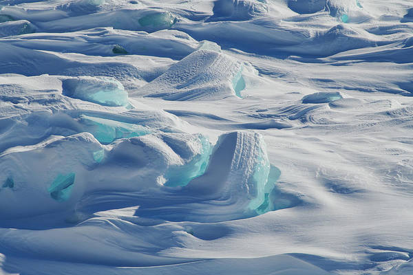 Photograph - Polar Bliss II by Doug Gibbons