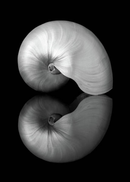 Photograph - Polished Nautilus Shell And Reflection by Jim Hughes
