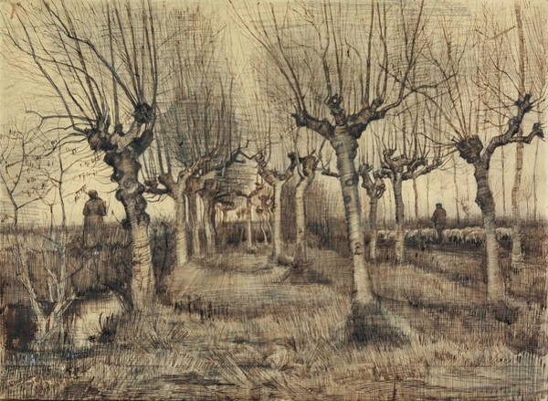 Wall Art - Painting - Pollard Birches, 1884 by Vincent Van Gogh