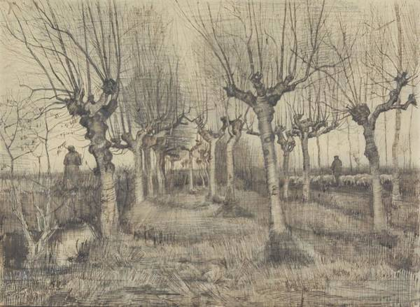 Painting - Pollard Birches Nuenen  March 1884 Vincent Van Gogh 1853  1890 by Artistic Panda