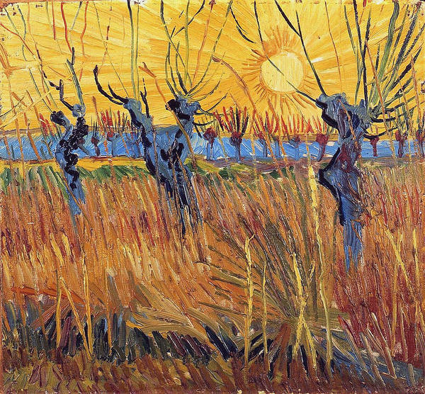 Ditch Painting - Pollard Willows With Setting Sun, 1888 by Vincent Van Gogh