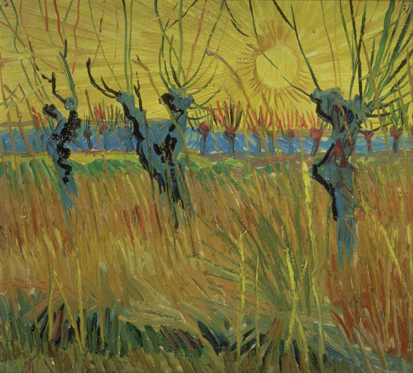Crt Painting - Pollarded Willows And Setting Sun by Vincent Van Gogh