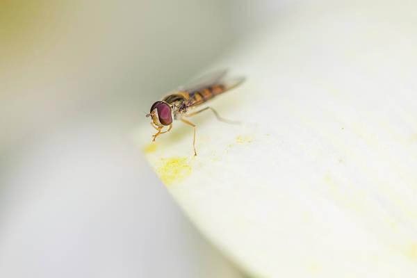 Photograph - Pollen Collector 2 by Raelene Goddard