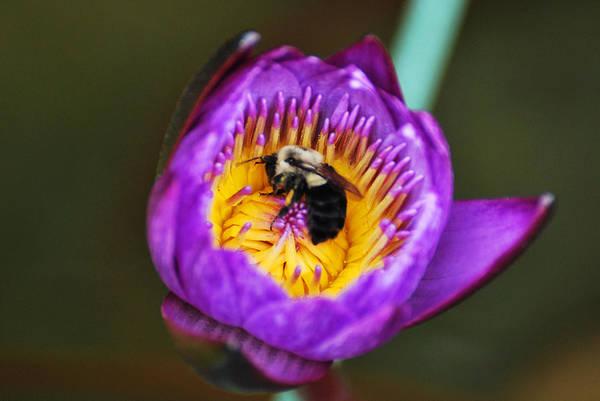 Photograph - Pollen Time by Teresa Blanton