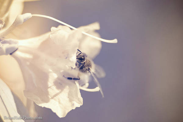 Photograph - Pollinating In Ir by Brian Hale