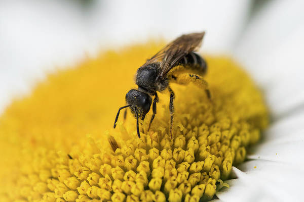 Photograph - Pollinator by Robert Potts