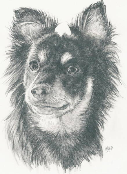 Mutt Drawing - Pomeroodle by Barbara Keith