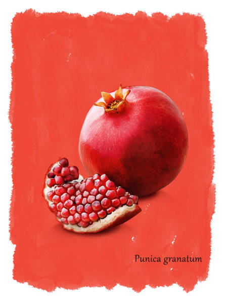 Wall Art - Photograph - Pomegranate by Mark Rogan
