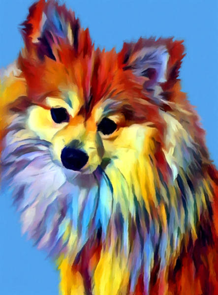 Wall Art - Painting - Pomeranian by Chris Butler
