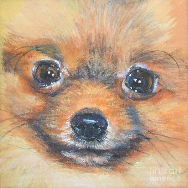 Pomeranian Painting - Pomeranian Close Up by Lee Ann Shepard