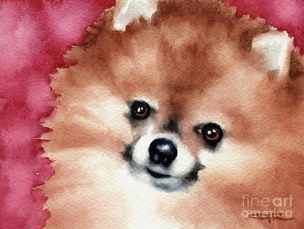 Pomeranian Painting - Pomeranian by David Rogers