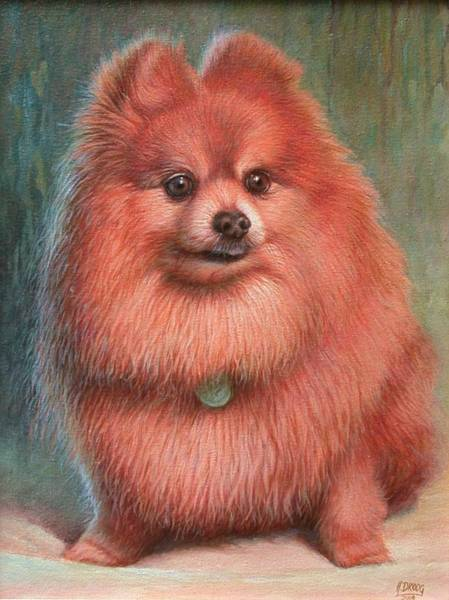 Hans Droog Wall Art - Painting - Pomeranian Dog by Hans Droog