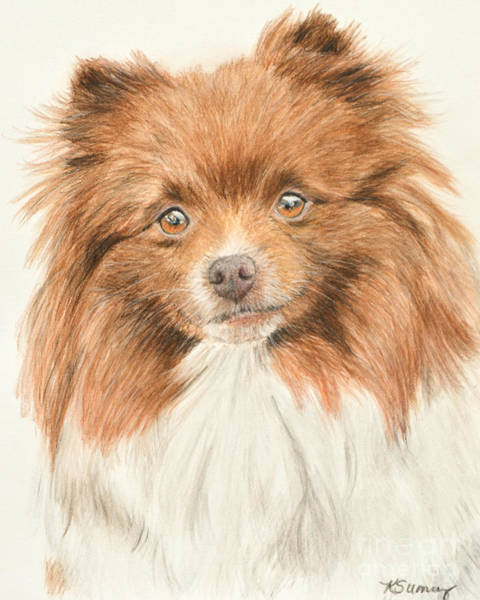 Art Print featuring the painting Pomeranian Orange Parti-colored by Kate Sumners