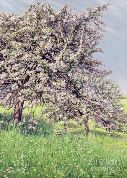 Apple Tree Painting - Pommiers Fleuris by Carlos Schwabe