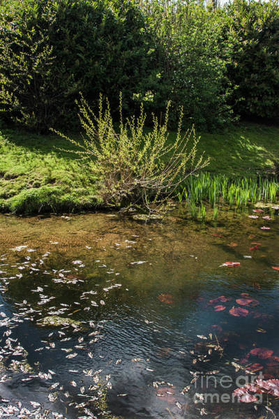 Photograph - Pond Art by Doc Braham