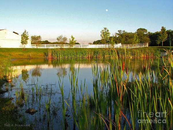 Photograph - Pond At Sunset by Todd Blanchard