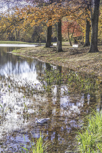 Photograph - Pond Bench Ponderings by Allen Nice-Webb