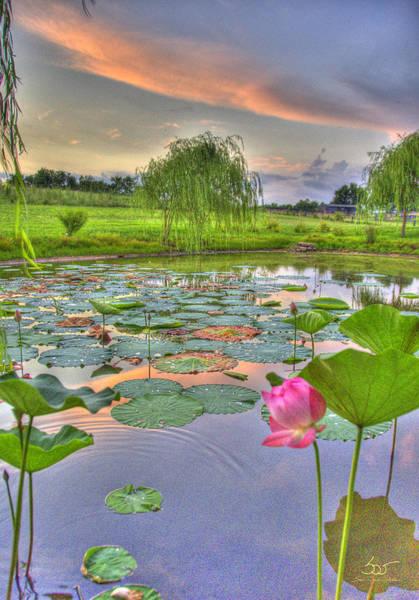 Photograph - Pond Dreams 5 by Sam Davis Johnson