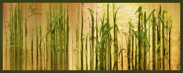 Wall Art - Photograph - Pond Grass Abstract Panel by Jessica Jenney