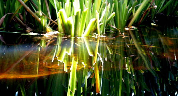 Photograph - Pond Grass IIi by James Granberry