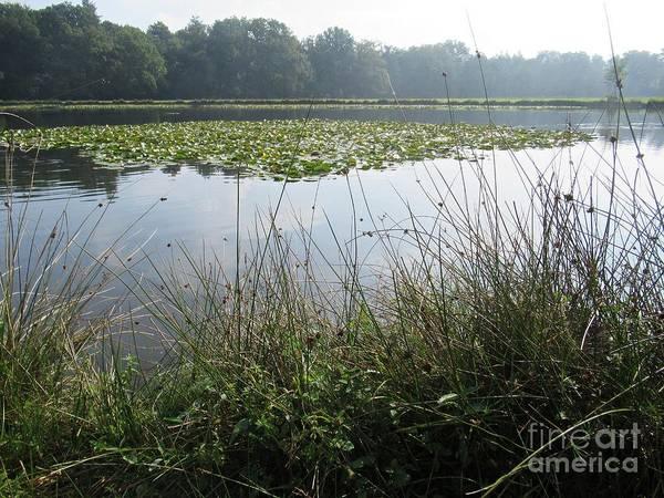 Photograph - Pond In Hoge Veluwe by Chani Demuijlder