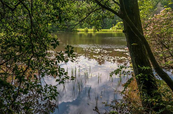 Pond In Spring Art Print