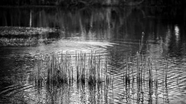 Photograph - Pond In The Everglades by Rudy Umans