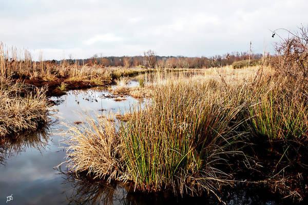 Photograph - Pond Landscape by Gina O'Brien