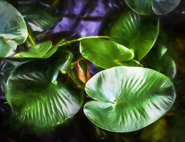 Bar Harbor Digital Art - Pond Lily Pads by Black Brook Photography