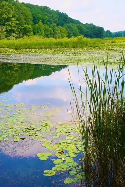 Photograph - Pond Near The Quarry by Polly Castor