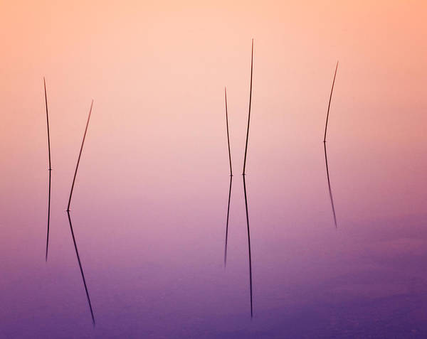 Wall Art - Photograph - Pond Reeds - Abstract by T-S Fine Art Landscape Photography